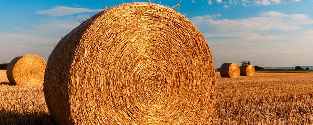 finanziamenti aziende agricole fotovoltaico